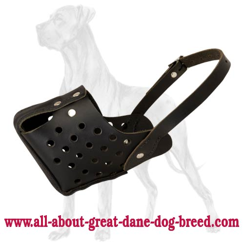 High-Quality Great Dane Muzzle for Agitation/Bite Training