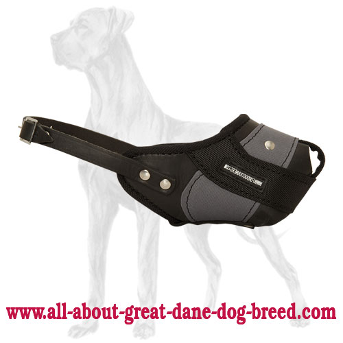 Professional Agitation Training Great Dane Muzzle of Genuine Leather and Nylon