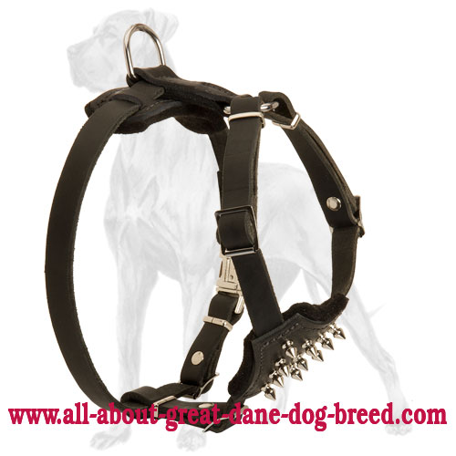 Spiked Leather Great Dane Puppy Harness with Padded Chest Plate