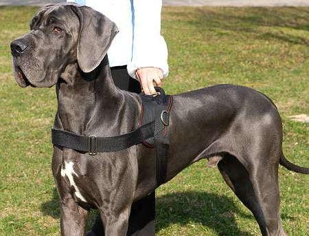 Blue Collar Dog Walking