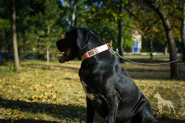 Great Dane leather leash with rust-free hardware daily-walks