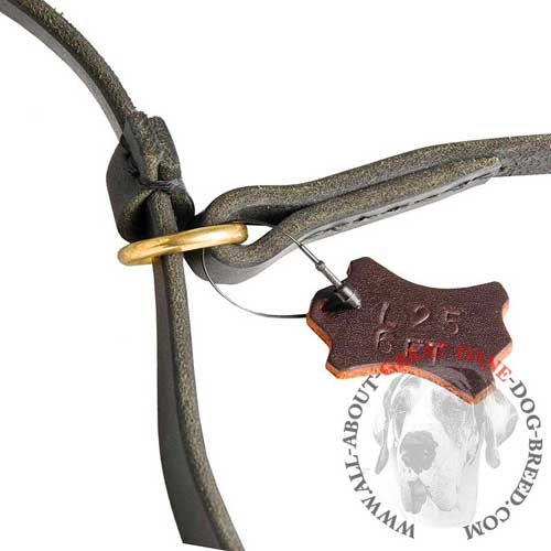 Leather Dog Leash with Collar
