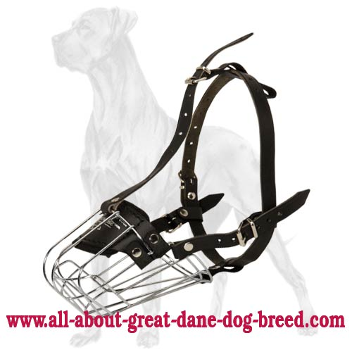 Stainless Firm Muzzle For Great Dane