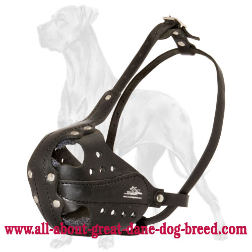 Great Dane Leather Muzzle with Ventilation Holes