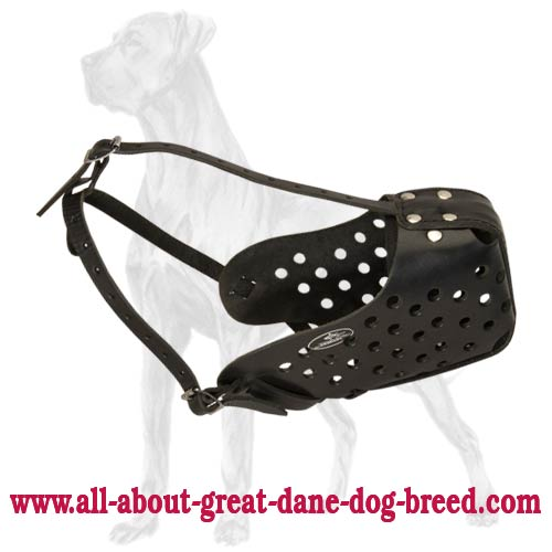 Extra Strong Leather Great Dane Muzzle