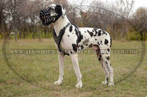Hypoallergenic Leather Great Dane Muzzle