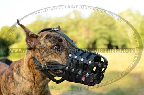Convenient Leather Great Dane Muzzle