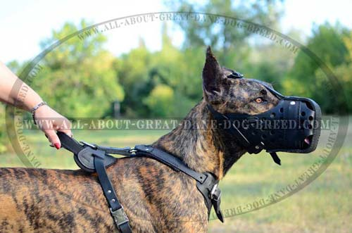Leather Great Dane Muzzle Made of Safe Material
