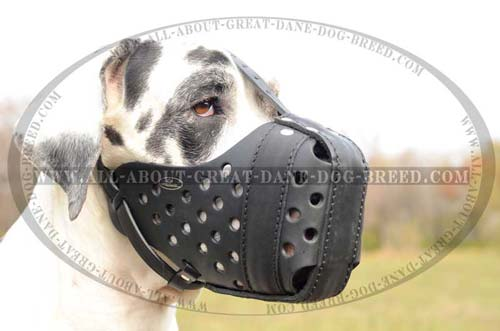 Hypoallergic Leather Great Dane Muzzle