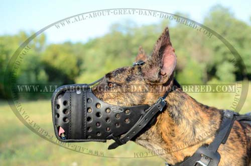 Exclusive Leather Great Dane Muzzle