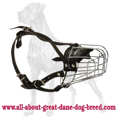 Delicate Light Big Dog Breed Muzzle