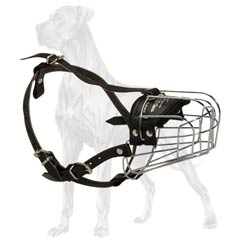 Delightful Great Dane basket muzzle