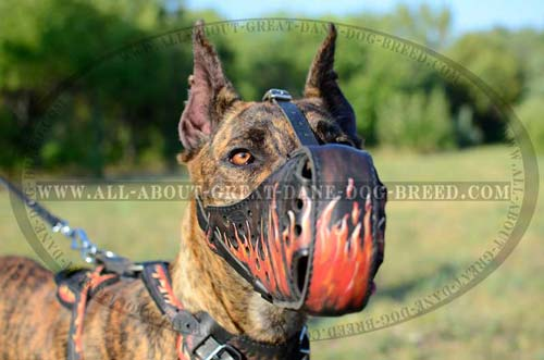 Fashionable Leather Dog Muzzle for Attack Work