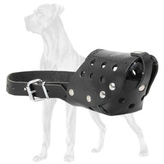 Walking muzzle for Great Dane breed