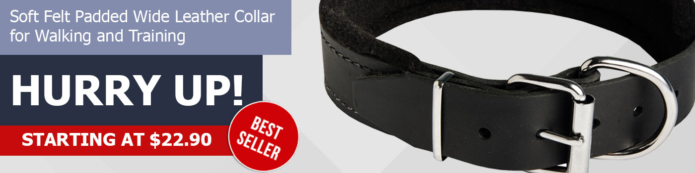 Top Quality Padded Leather Collar for Great Dane
