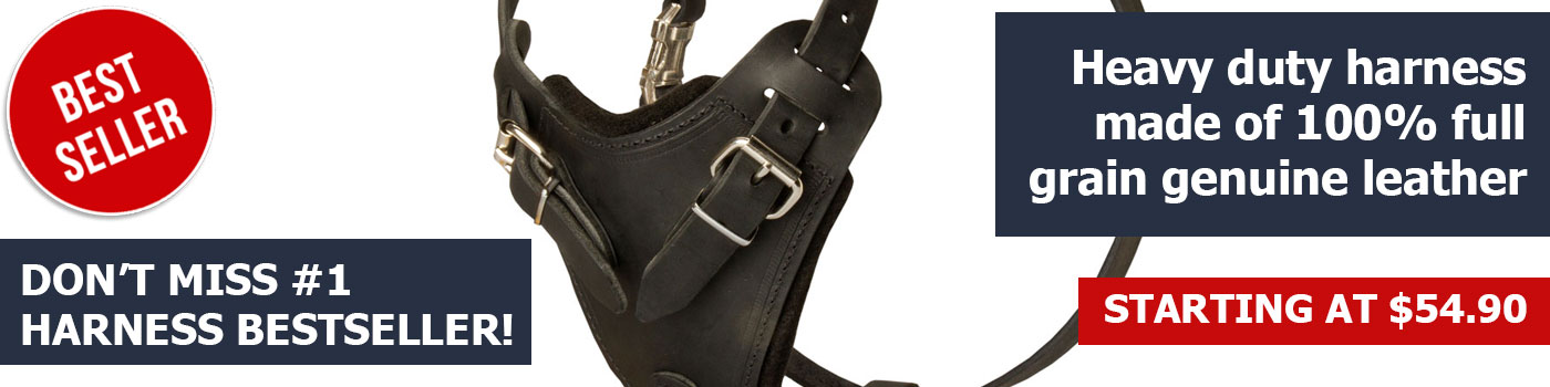 Durable Dog Harness - Agitation Leather Harness for Great Dane